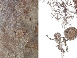 Descubren arte rupestre de hace 2.500 años en una isla de Indonesia