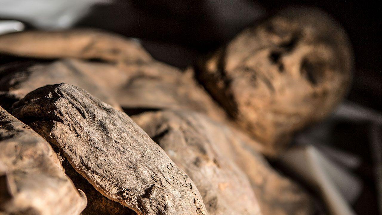 Momia medieval revela la evidencia más antigua de infección mortal por Hepatitis B