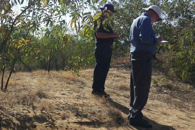 Más de 250 montículos de tierra han sido mapeados a lo largo de un tramo costero de 60 kilómetros de la zona de Mapoon