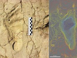 Huellas de 700.000 años revelan lo que era ser un niño en tiempos prehistóricos