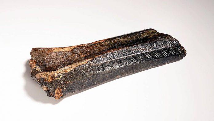 Hallan hueso de bisonte de 13.500 años con misteriosos tallados, en el fondo del Mar del Norte