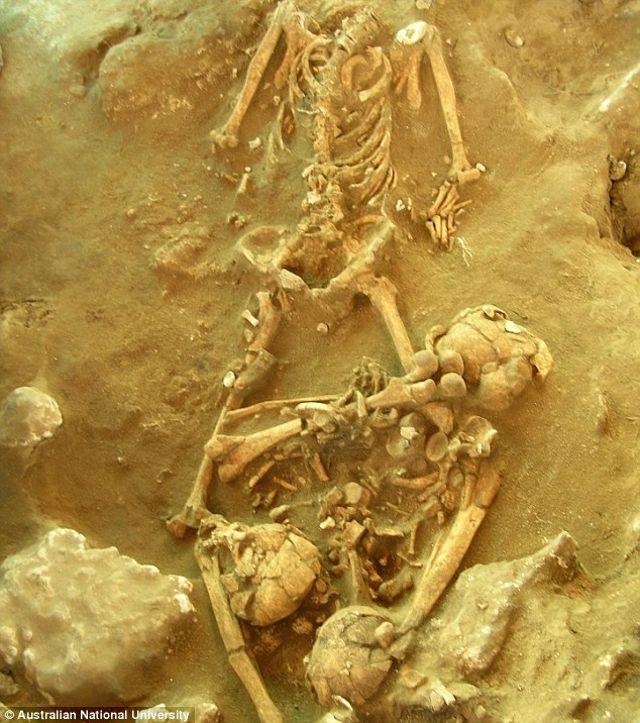 En la imagen se puede ver un esqueleto antiguo que se utilizó para publicar nuevas investigaciones sobre la historia de Vanuatu, una nación insular en el Océano Pacífico Sur. Los científicos analizaron ADN moderno y restos antiguos para determinar cómo la gente terminó en Vanuatu hace miles de años
