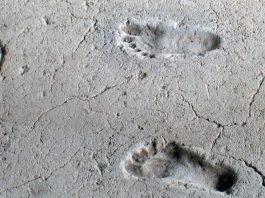 Hallan huellas humanas de 13.000 años en costa canadiense