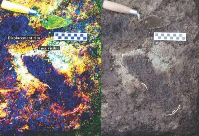 Hay 29 huellas en este sitio, aunque los investigadores sospechan que muchas más se han conservado en otros lugares