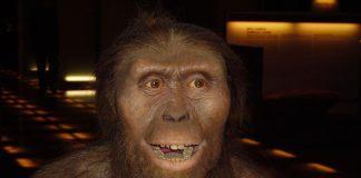 Caminar vertical evolucionó hace 3.6 millones de años