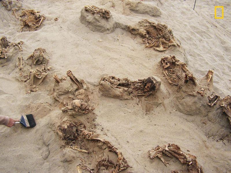 Conservado en arena seca durante más de 500 años, más de una docena de cuerpos son revelados por las manos de los arqueólogos. Los investigadores informaron que «a excepción de tres entierros adultos (dos hembras y un macho), todos los restos esqueléticos humanos eran de niños, con edades comprendidas entre cinco y catorce años, y la mayoría cayendo en el rango de ocho a doce años. edad»