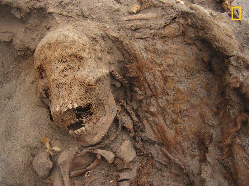 El cráneo de un niño, la cuerda utilizada para llevar la llama al sitio y los restos de la llama. Las extrañas posiciones funerarias y la ausencia de bienes funerarios asociados con ellos sugieren que no se trataba de un cementerio Chimú típico