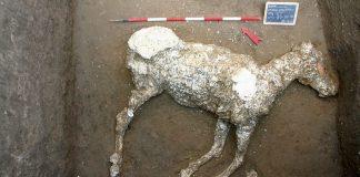 Hallan un caballo sepultado en lava, el último «tesoro» de Pompeya
