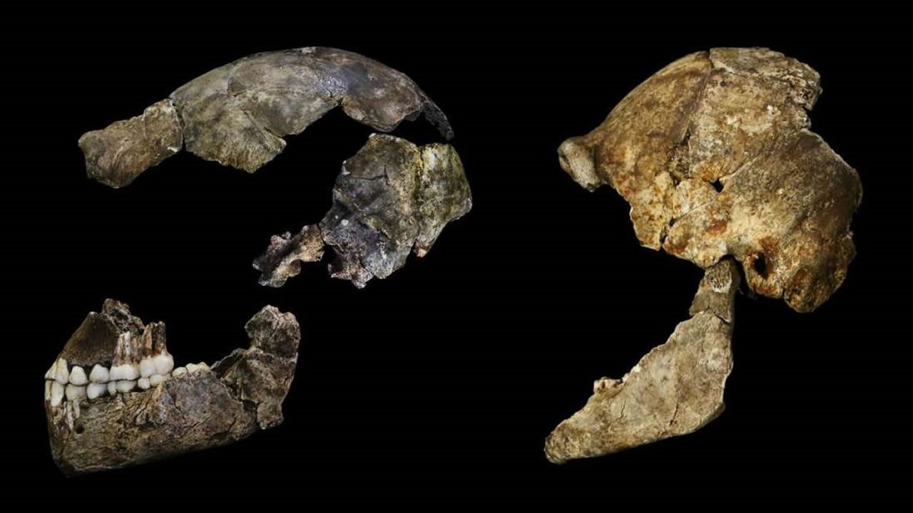 Aunque los primeros homínidos son más pequeños que los humanos, tienen cerebros sorprendentemente similares