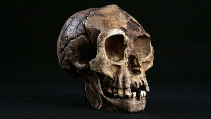 Hallazgo de 700.000 años de antigüedad sugiere que tenemos que reescribir la historia de la expansión humana