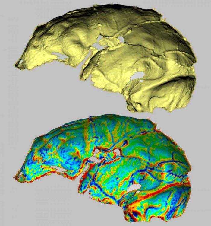 La endocast de Homo naledi muestra un lóbulo frontal bien desarrollado