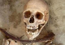 Revelan el origen de misteriosos 'vampiros' de Polonia