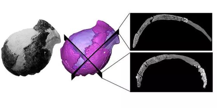 Los investigadores reconstruyeron virtualmente el cráneo antiguo