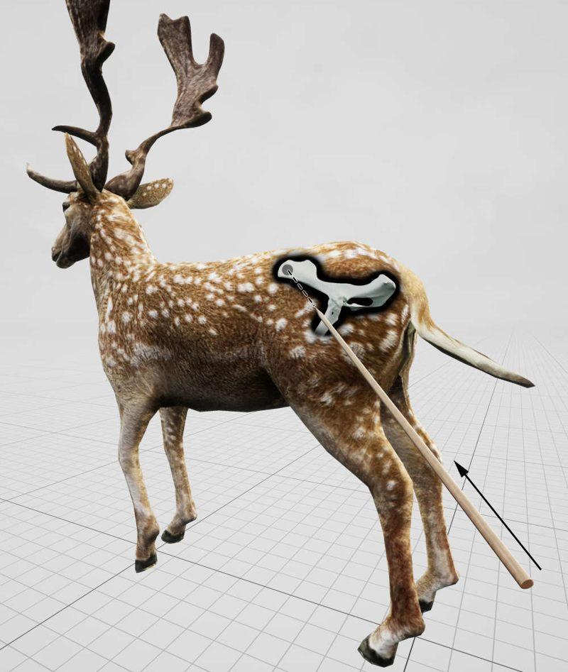 Ángulo de impacto estimado que se muestra en relación con un gamo en pie para la lesión de caza observada en la pelvis de un gamo extinto, asesinado por los neandertales hace 120.000 años en una orilla del lago cercana a la actual Halle (Alemania)