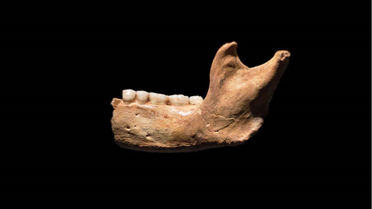 Estos son los fósiles humanos más antiguos de Europa occidental y poseen un millón de años