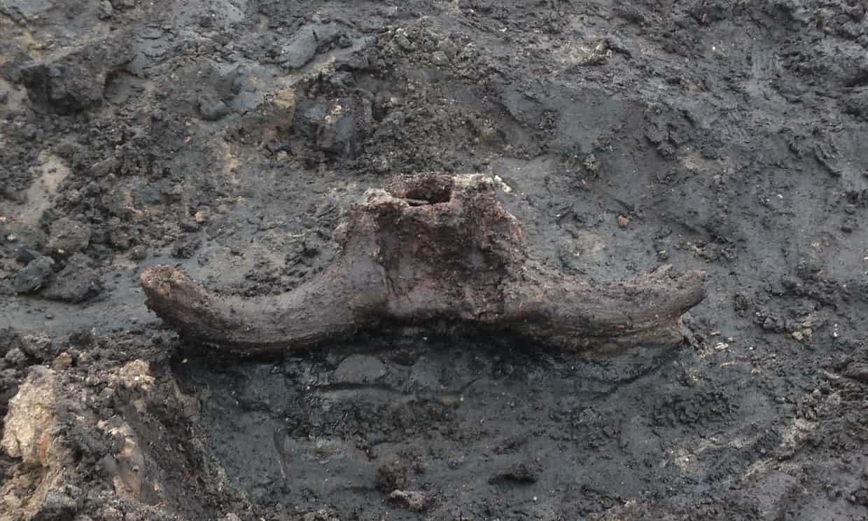 El cráneo de un aurochs en el sitio