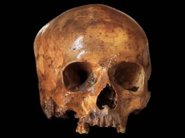 Ancestros de hace 4 millones de años eran más parecidos a nosotros de lo que se creía
