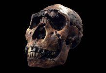 Hallazgo podría reescribir la historia de la humanidad