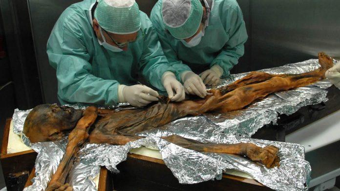 «Hombre de hielo» de 5.300 años revela secretos de antiguas dietas