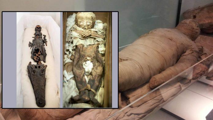 Momia egipcia con cabeza de niña y de cocodrilo es expuesta por primera vez