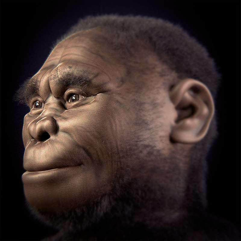 Reconstrucción de una hembra de Homo Floresiensis