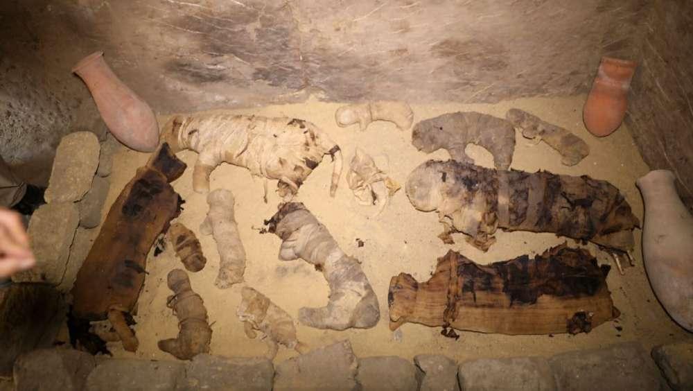 Gatos momificados