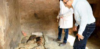 Hallan docenas de gatos momificados y cientos de estatuas de gatos en Egipto