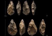 Hallan herramientas de piedra hechas por humanos antiguos en Arabia