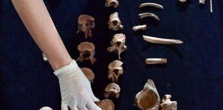Hace 4.000 años, un «príncipe» fue víctima del asesinato político más antiguo conocido