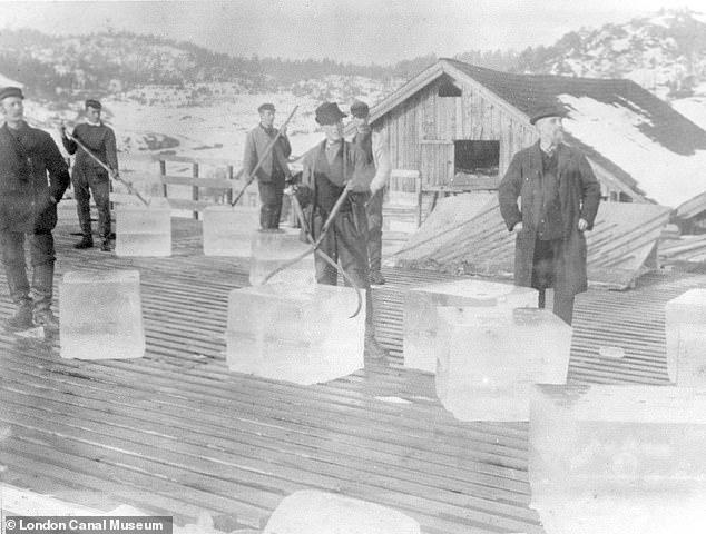 Se importaron cerca de 300 toneladas de hielo de los lagos de Noruega en la década de 1820 para ser almacenados en la cámara de enfriamiento. Los trabajadores del comercio de hielo manejan enormes bloques de hielo extraídos de Noruega, alrededor de 1900.