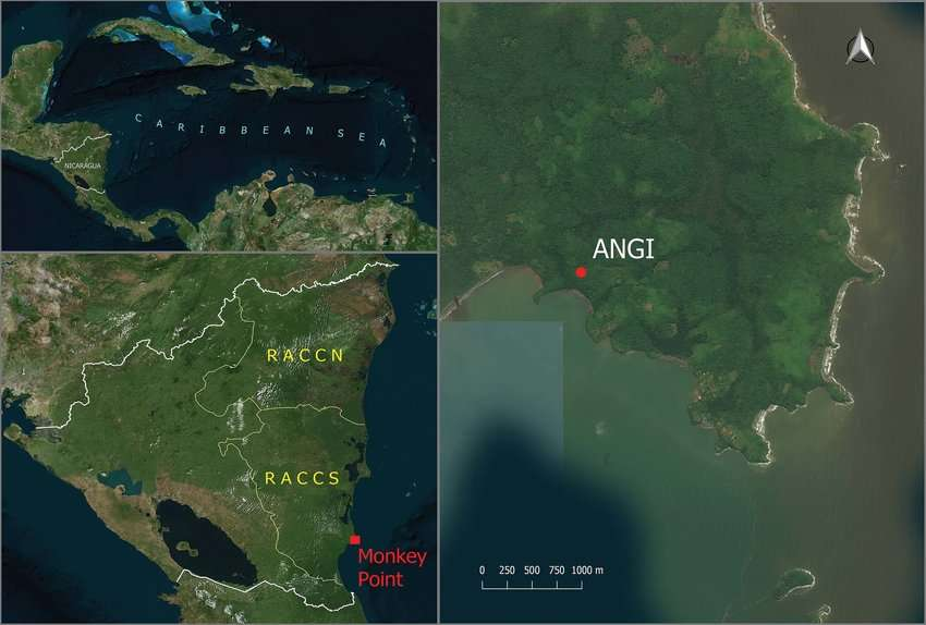 (Izquierda) Mapa de Nicaragua con la Región Autónoma de la Costa Caribe Sur y la ubicación del pueblo de Monkey Point. (Derecha) Ubicación del sitio de matriz de Angi