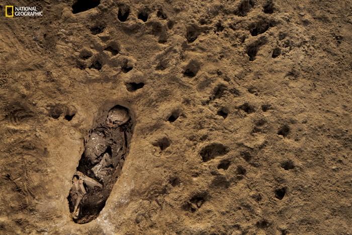 Las huellas de pezuñas de llamas jóvenes se conservan en una capa profunda de lodo alrededor de la tumba de un niño sacrificado en Huanchaquito
