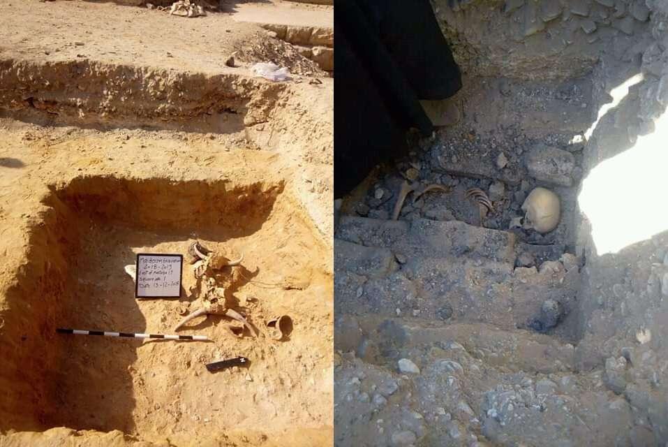 Los dos cráneos de toro (izquierda) y los restos esqueléticos de un humano (derecha)