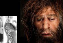 Los neandertales no eran encorvados: estudio revela que su postura era similar a la nuestra