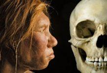 Confirman el hallazgo de los primeros fragmentos de cráneo de Denisovano
