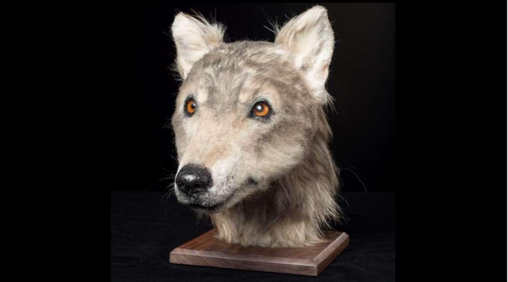 Modelo creado a partir del cráneo de perro descubierto en Cuween Hill Chambered Cairn, Orkney