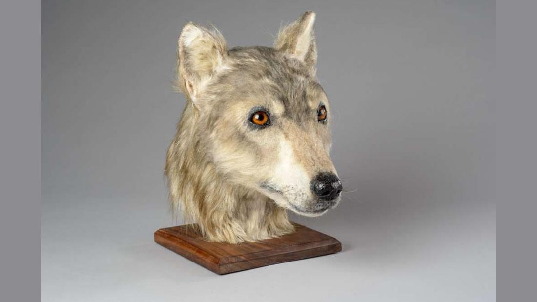 Esta es la cara de un perro de hace 5.000 años, ¡y es adorable!