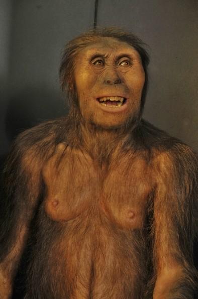 Reconstrucción de Lucy (AL 288-1) en el Museo de la Evolución Humana (MEH)