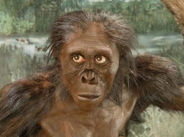 Ancestro humano «Lucy» era menos inteligente que un simio, afirma estudio